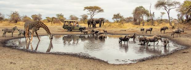 Elephant spotting is more frequent at Little Chem Chem camp,along with antelopes, giraffes and zebras