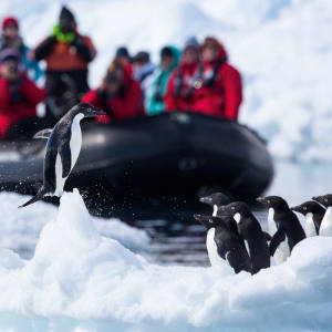 Silversea's Silver Cloud has 18 Zodiacs to take guests on excursions to observe the polar waters' wildlife
