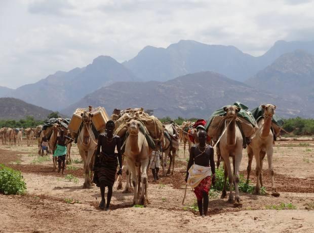 The Samburu lead a camel caravan in the Milgis region
