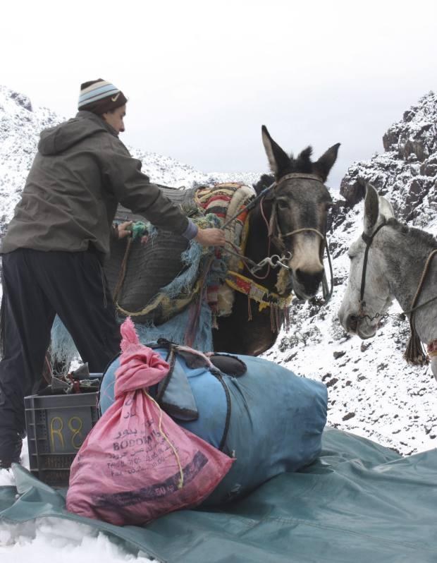 A Berber porter loading the mules.
