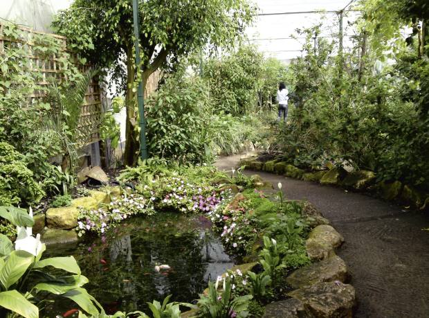 John Calvert's Stratford-upon-Avon Butterfly Farm imported over 1m tropical pupae last year.