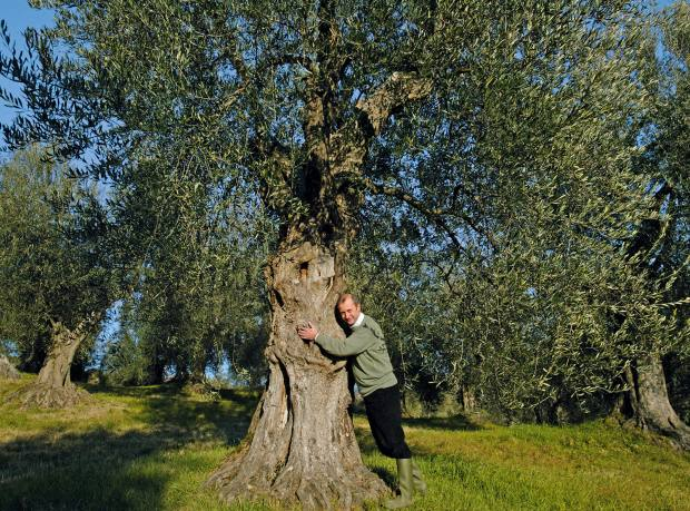 Armando Manni in his olive grove in Tuscany