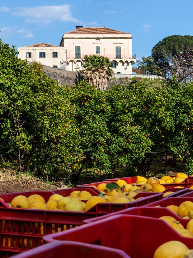 Workshops will also venture outside the villa for activities including lemon picking and trips to boutique wineries