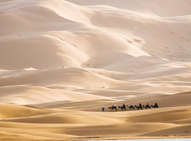 Camel riding in the Moroccan Sahara Desert on a Lawrence of Morocco organised tour
