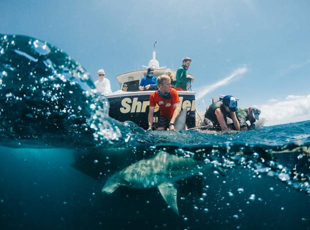 Members of the University of Miami shark research and conservation programme, onboard Fleet Miami's D/Y Shredder and supported by the International Seakeepers Society, prepare to tag a shark