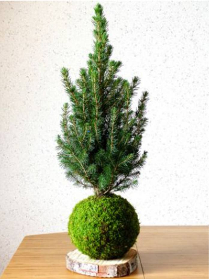 The pop-up will include sustainable Christmas tree design workshops, €25