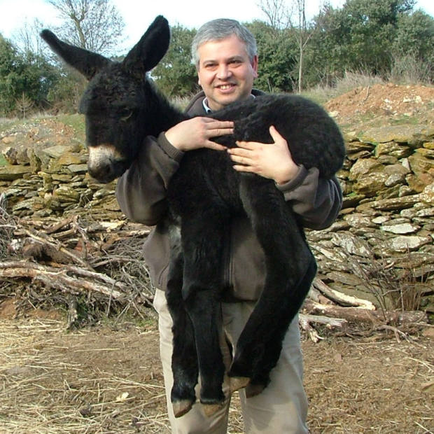 One of Tomelo's donkeys