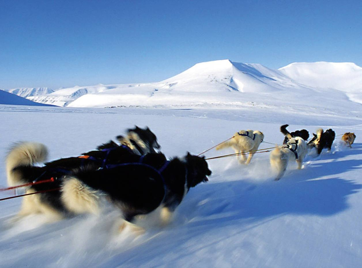 A dog-sledding expedition to the Scott Turner glacier