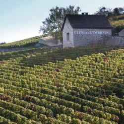 The Clos des Lambrays vineyard in Burgundy, part of Domaine des Lambrays