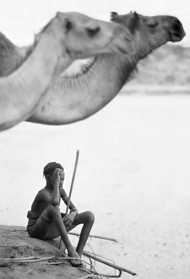 Adolescent Boy Sits in the Shade of his Camels, c1968. Limited edition of eight, grand platinum photographic print, £12,000. (Original from the book Vanishing Africa for the Mirella Ricciardi Archive)