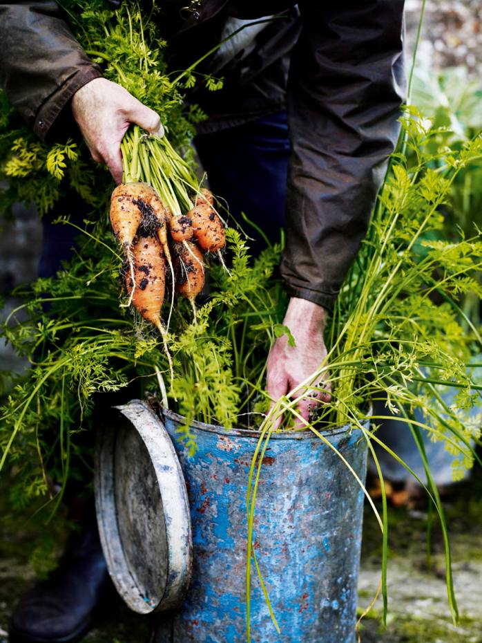 Digging up carrots at Sussex country house and garden Great Dixter