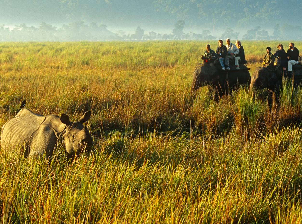 Elephant riders view a one-horned rhino in Kaziranga National Park, Assam, India