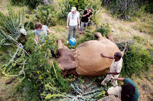 Journeys for Giants, an adventure spin-off from charity Space for Giants, are bespoke trips to help fund conservation