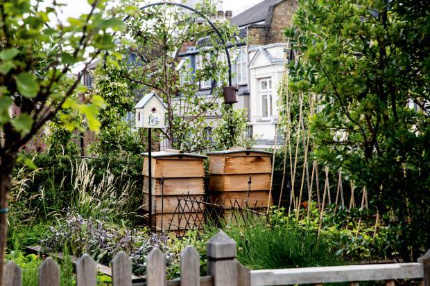 Beehives in the rooftop garden of London's Ham Yard Hotel