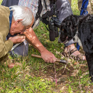 Aynaud and Farah, his faithful border colli, searching for truffles