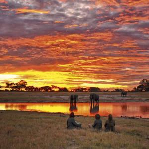 Elephants drink at sunset in Hwange National Park