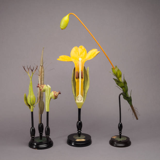 Peter Petrou recently sold these 19th-century Brendel flowers for about £9,000