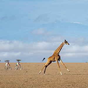 The Great Plains Ride for Lions mountain-bike race across Kenya's Amboseli-Tsavo region