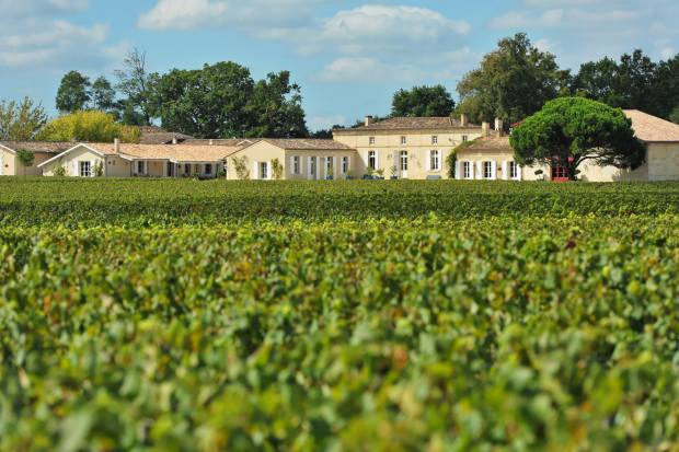 At Domaine de Chevalier, the 25 hectares of old vines directly in front of the château were spared the worst of the frosts