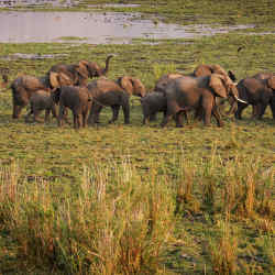 Elephants roam Liwonde National Park