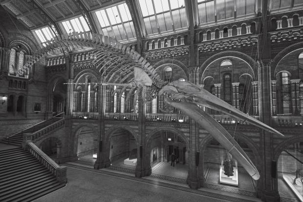The biggest single donation in the Natural History Museum's 140-year history was £5m, given in 2014 by Sir Michael and Lady Hintze, after whom the museum's Central Hall was renamed