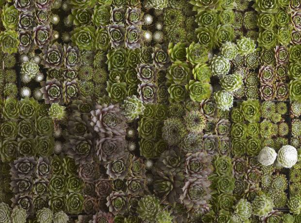 A wall panel of succulents designed by Flora Grubb