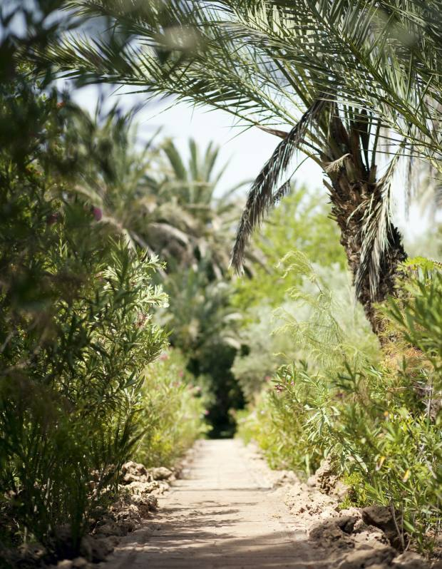 Serge Lutens' garden in Palmeraie, Marrakech, provides space for contemplation.