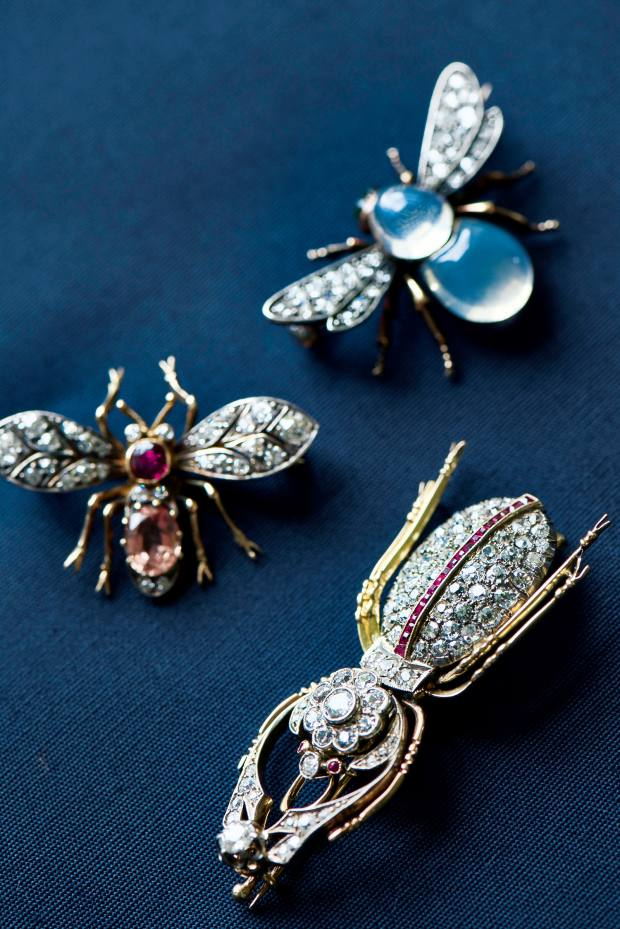 Tennant's collection of insect jewellery