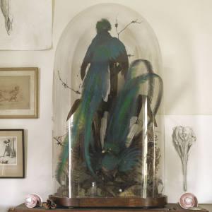 Cased quetzals, c1880