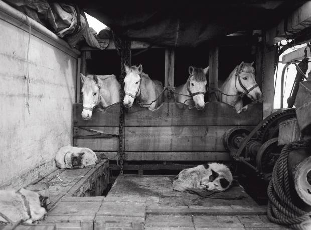 Some of Scott's expedition ponies on board the Terra Nova
