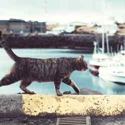 Invoxia Pet Tracker, £119