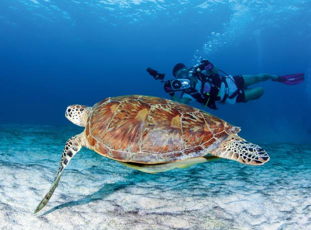 A sea turtle off Human Island