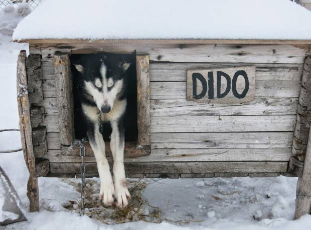 Dido the husky in her kennel