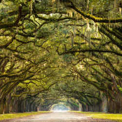An avenue of oak trees at Wormsloe Estate, part of All Roads North's trip to Little St Simons Island, Georgia
