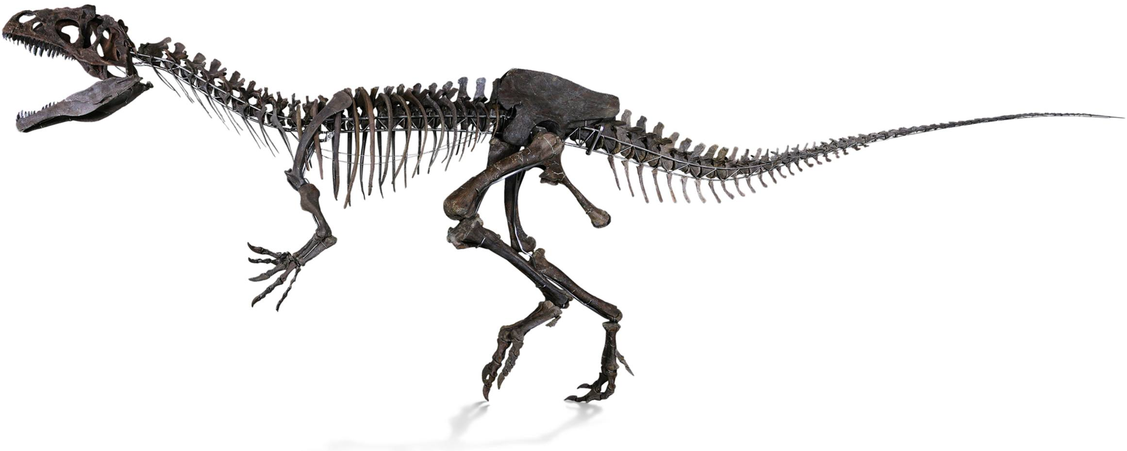 The unnamed theropod has an estimate of €1.2m-€1.8m