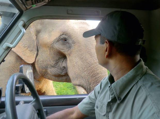 Leopard Safaris' Noel Rodrigo greets an elephant on a game drive in Yaya National Park