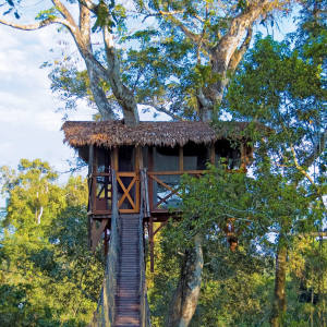 One of the experiences offered by travel club Prior is the chance to stay in a private treehouse in the Amazon