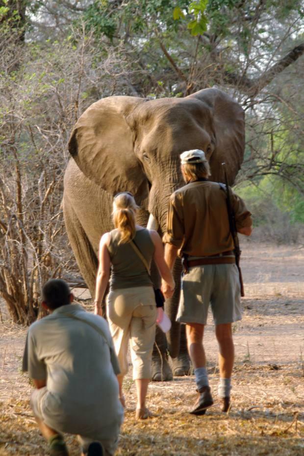 Goliath Safari Camp owner Stretch Ferreira takes guests on a walking safari in Mana Pools National Park, Zimbabwe