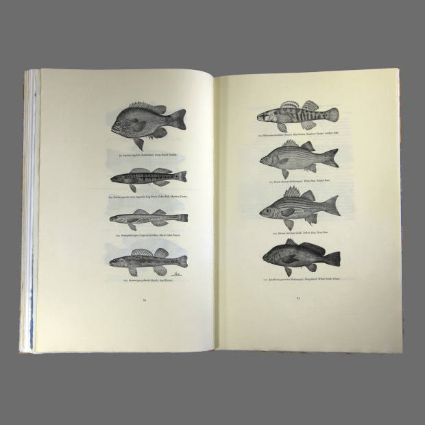 Lac Des Pleurs: Printed from the original electrotypes made for Fishes of Minnesota