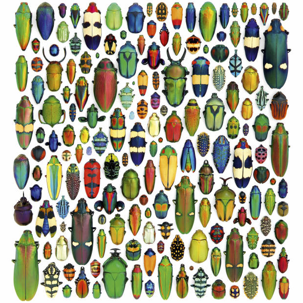Coleoptera Mosaic by Christopher Marley, $2,115