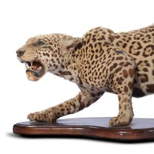Taxidermed jaguar, £5,000 to £8,000
