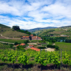 The tour of the Douro Valley will take in the region's fine vineyards