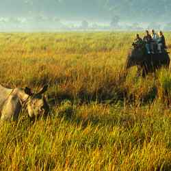 Elephant riders view a one-horned rhino in Kaziranga National Park, Assam, India