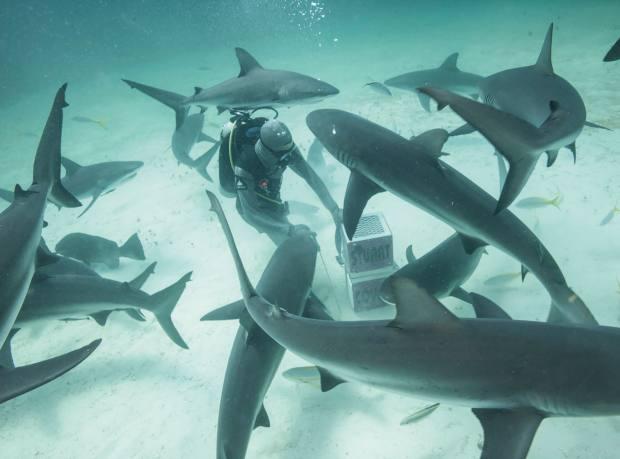 Shark wrangler Marcus Kitching