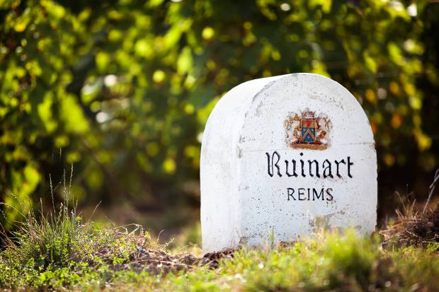 The Ruinart vineyard is located in the Champagne region of France
