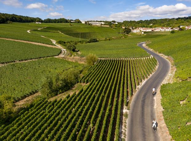 Guests can explore the vineyards on an electric bicycle