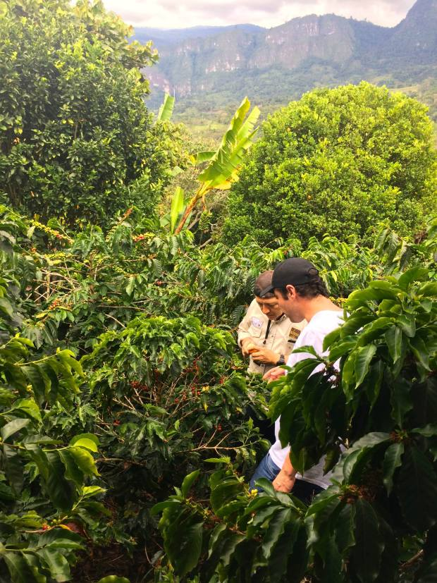 The plants in Colombia are regularly inspected to ensure they will produce quality beans