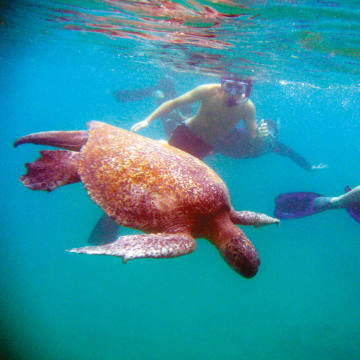 Swimming with turtles on an environment-focused family expedition to the Galápagos with National Geographic Global Explorers