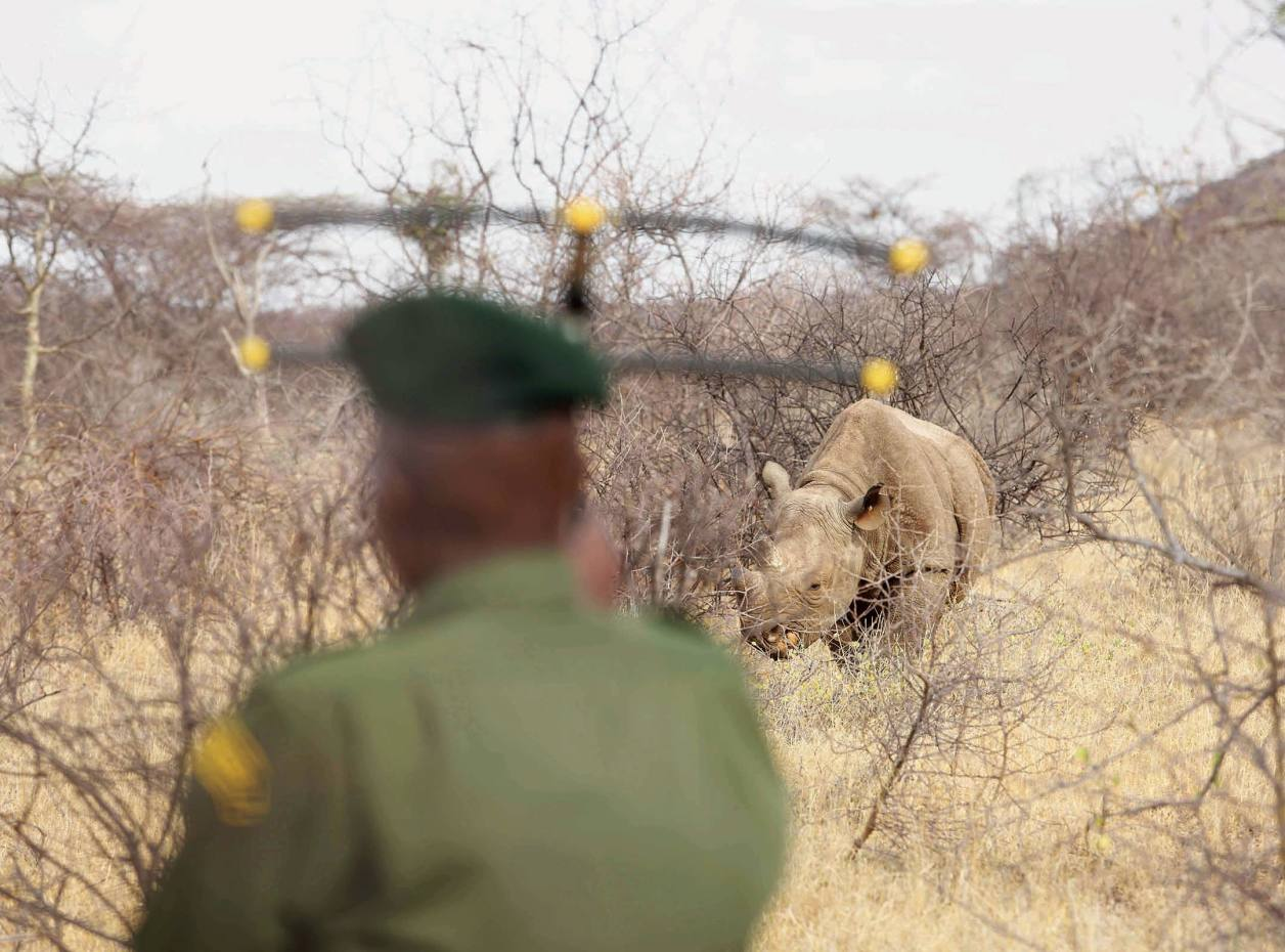 The Sera Rhino Sanctuary provides 24-hour security for 11 highly endangered black rhinos
