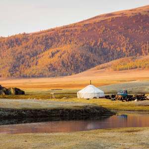 A traditional Mongolian ger in the Altai Mountains surrounded by the family's livestock